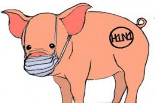 Gejala Flu Babi - Mengetahui Dasarnya setiap orang yang